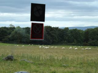 A kis bárányok legelnek a szigeten