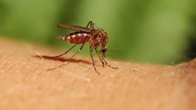 Περιστατικό λοίμωξης στην Αργολίδα από τον ιό του Δυτικού Νείλου