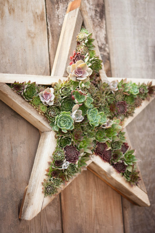 beautiful framed succulents