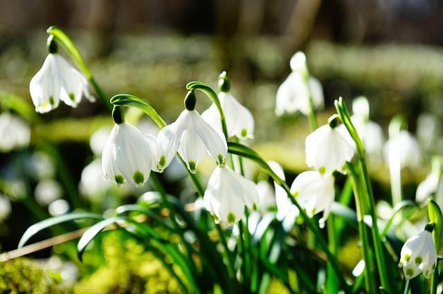 hoa đẹp nhất thế giới 4