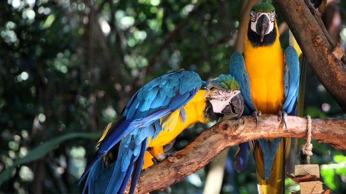 Burung Tercantik Dunia