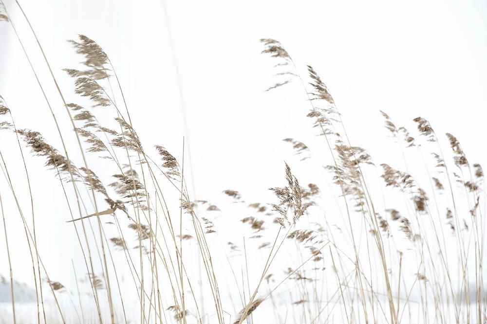 Kuopio, talvi, valokuvauskurssi, Frida Steiner, Visualaddict, kurssi, valokuvaus, valokuvaaminen, kaupunki, Suomi, Finland, Valokuvaaja, Frida Steiner, Photography, ranta
