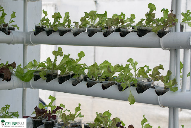 hydroponics farm in the philippines