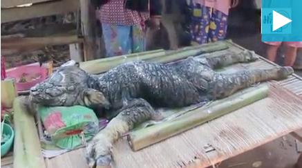 Ταϊλάνδη: Περίεργο ζώο γεννήθηκε από βουβάλι (Βίντεο)