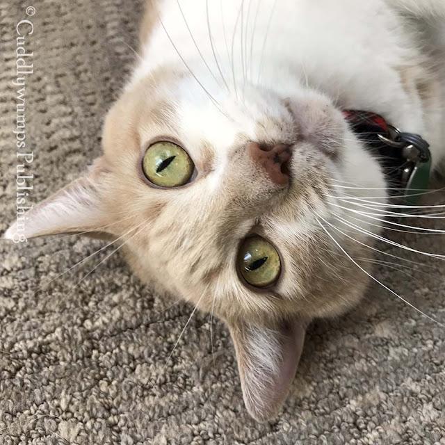 #SundaySelfie #catselfies