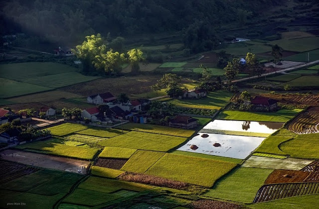 Immerse yourself in the golden color of ripe rice in the Bac Son valley 1