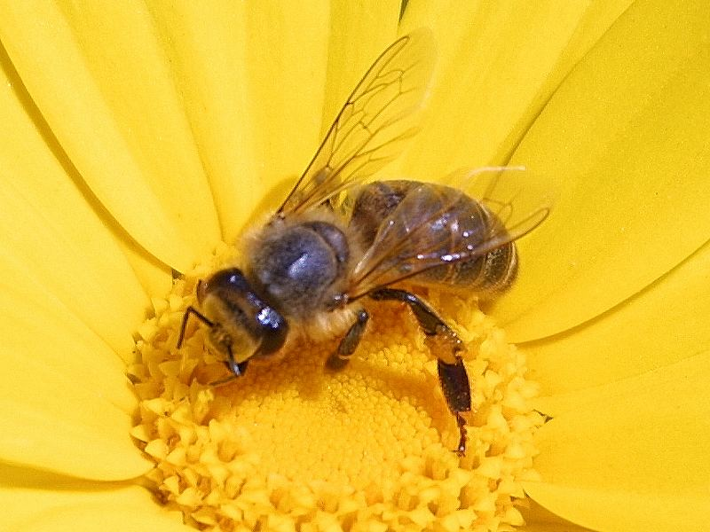 Dibuat tanpa pertolongan lebah atau menggunakan gula sebagai nektar.  Umumnya mempunyai warna sama dengan madu asli. Karena itu bagi orang awam  sulit untuk ... 8cb8b9c701