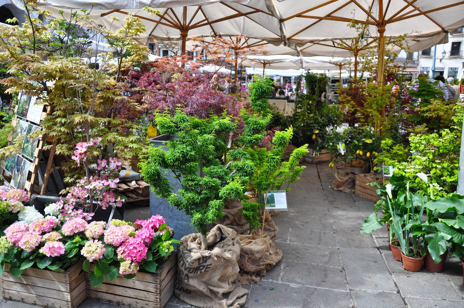 A mini garden centre, 7th Edition of 'Fiori, colori, e...' - Floriculture market show, Vicenza, Italy