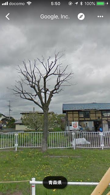眼の前の公園にある落葉後枝を切られたこぶしの木