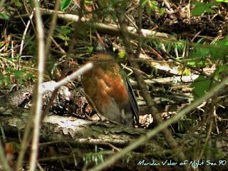 Little bird in the Idaho mountains #Idaho #Idahome #wildlife