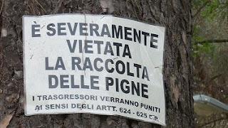 Tentano furto di 900 kg di pigne a Castelforte, tra gli arrestati un albanese residente ad Amaseno