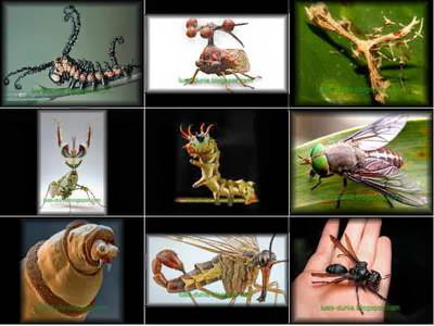 20 Serangga paling mematikan di Dunia