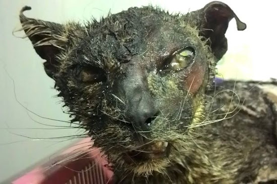 Clever Bulletin: Horrific moment: cat was cruelty burned alive in