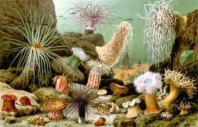 Klasifikasi, Peranan Filum Porifera dan Cnidaria