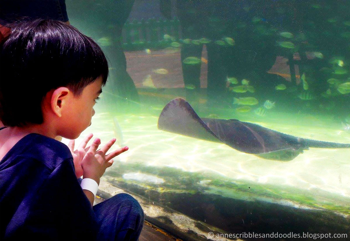 Manila Ocean Park: Sharks and Rays Encounter | Anne's Scribbles and Doodles