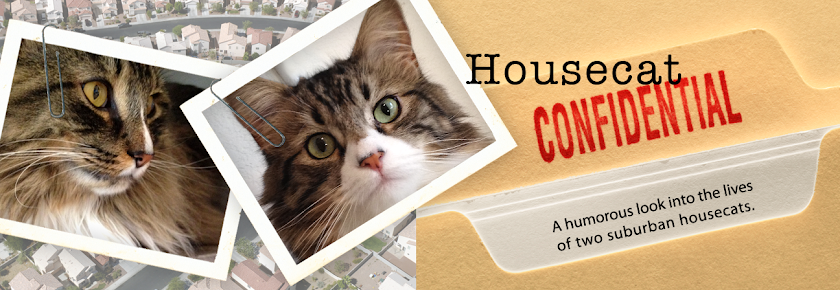 Housecat Confidential