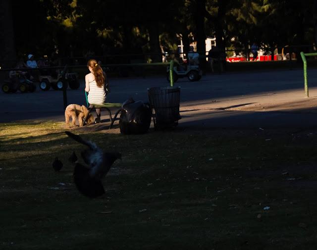 Joven con su perro en el parque