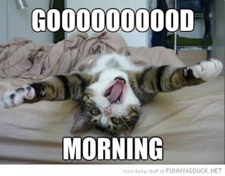funny cat saying good morning picture