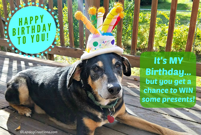 birthday dog giveaway gifts rescue senior