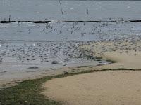Bahía de Arcachón