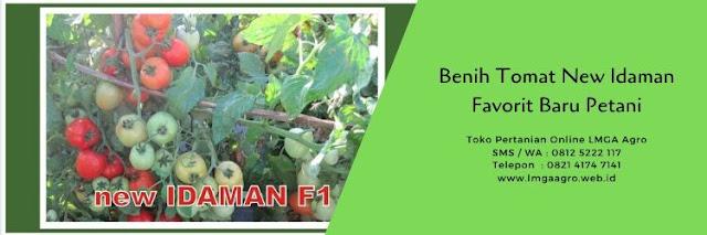 benih tomat new idaman,tomat new idaman,diamond seed,budidaya tomat,lmga agro