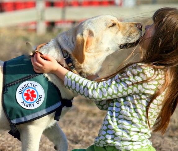 Perros de ayuda a personas con diabétes