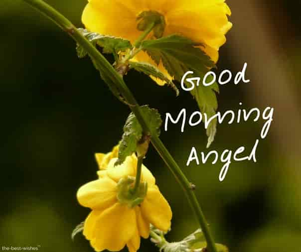 good morning angel with a yellow roses