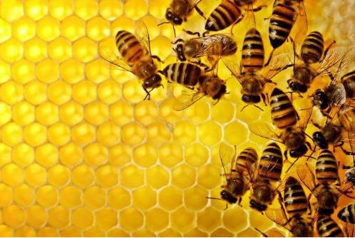 Πωλούνται μελισσοσμήνη στον Έβρο