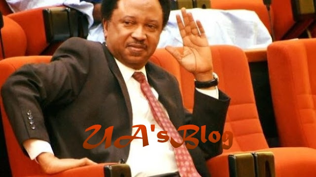 N13.5M Monthly Allowance: Angry Lawmakers Plot Shehu Sani's Downfall For Revealing How Much They Are Paid Monthly