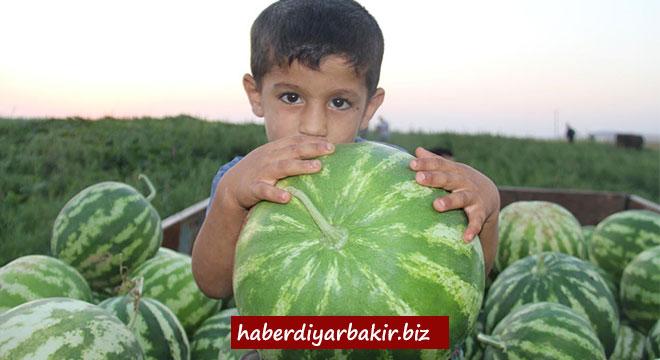 Diyarbakır'da karpuz hasadı devam ediyor