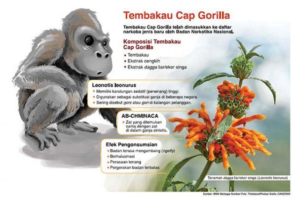 Hati-hati Wahai Perokok! Tahukah Anda, Tembakau Gorila Yang Sebelumnya Pernah Diminati Kawula Muda Sudah Masuk Daftar Narkotik Jenis Baru Lho!