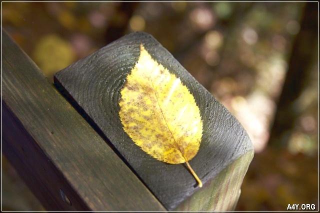 chiếc lá tháng 9 đã rụng rơi