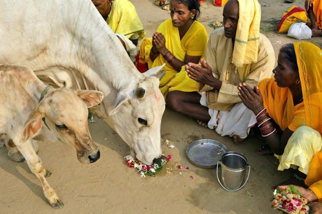 Dicurigai Membawa Daging Sapi, Dua Perempuan Muslimah Dipukuli Dengan Sadis di India