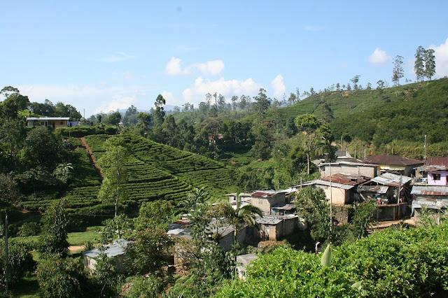 Tea plantations Sri Lanka