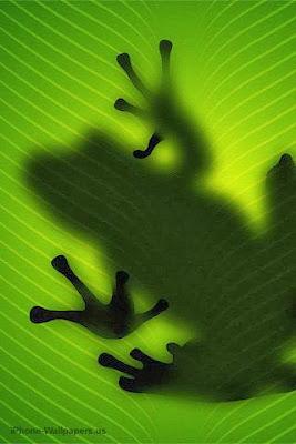 Frog - amphibians