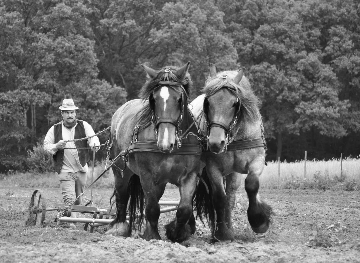 Film het paard van sinterklaas online dating 7