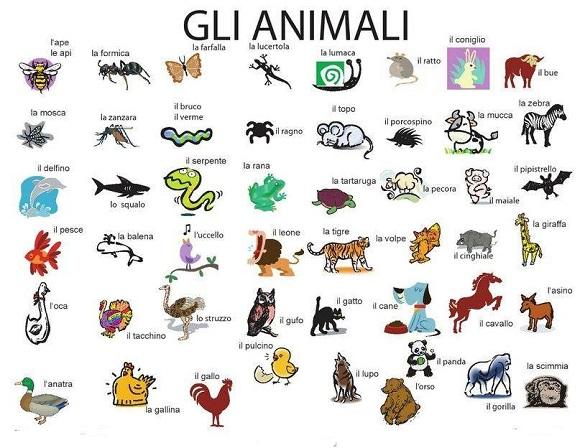 Tutti I Nomi Dei Versi Degli Animali Scuolissimacom