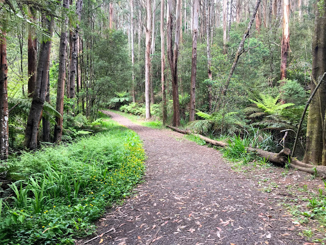 RJ Hamer Arboretum, Olinda