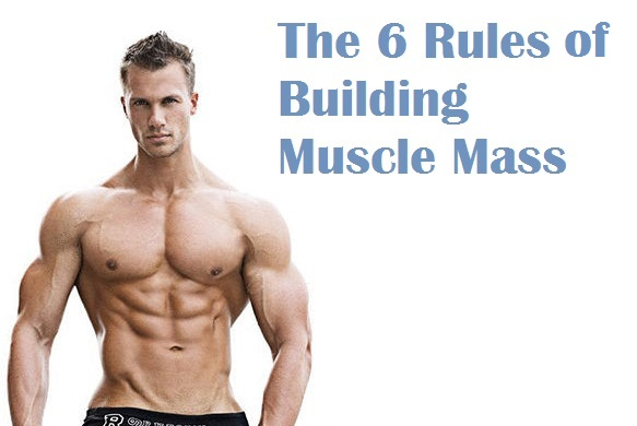 Muscle palace build muscle mass how to gain muscle mass malvernweather Choice Image