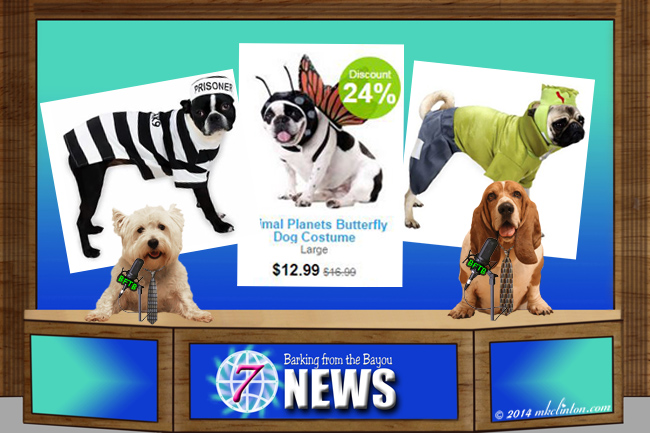 BFTB NETWoof News with pet Halloween costumes