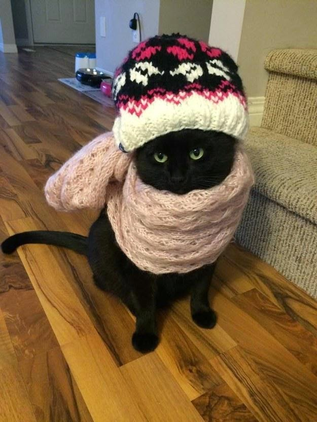Cold cat is cold
