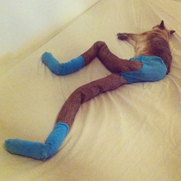 tights for cats