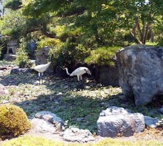 拝島の普明寺さんの庭