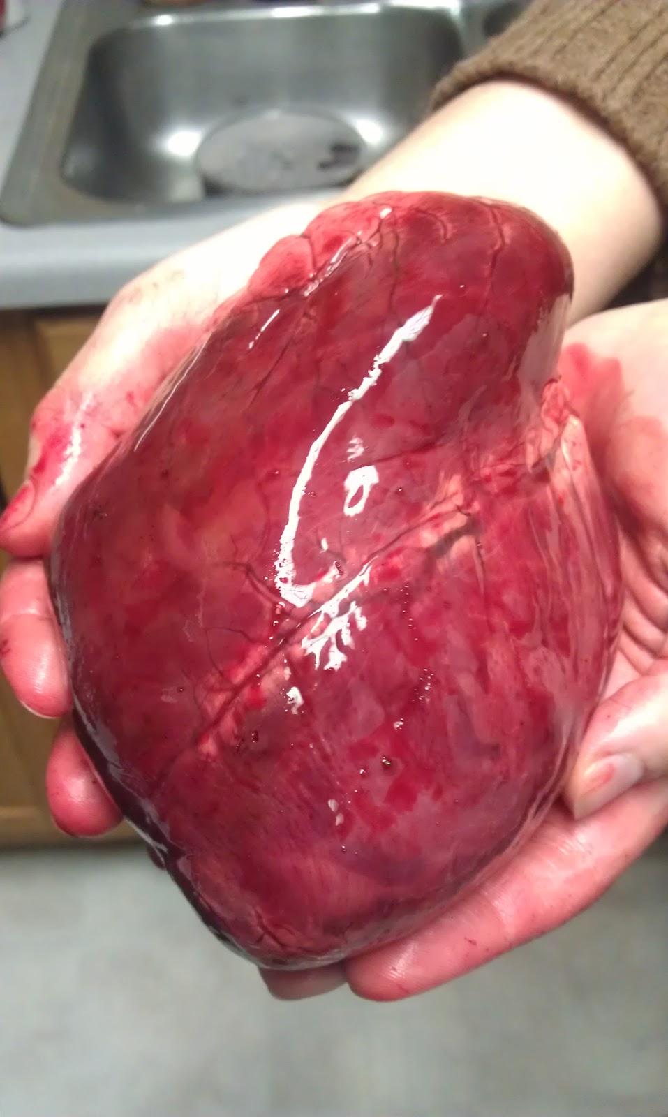 Real Healthy Human Heart