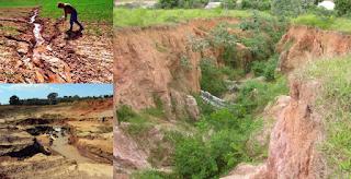 Por que reflorestar as margens de rios e nascentes é tão importante?