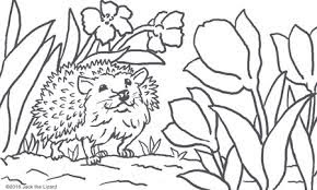 Wild Baby Hedgehog In Jungle Coloring Pages Animals