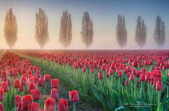 التنزه الازهار ...اجمل حدائق الازهار