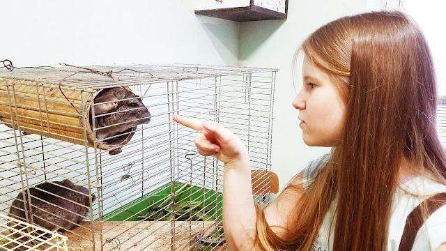 Самарский детский эколого-биологический центр: - Кто-кто в теремочке живёт? Привет, а ты не кусаешься?