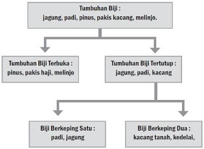 Contoh Bagan Klasifikasi Tumbuhan Biji