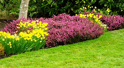 Lawn and Garden Maintenance Tips